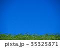 草原 青空 晴れの写真 35325871