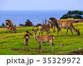 野崎島ワイルドパークと野生の鹿 小値賀諸島 五島列島 35329972