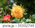 花 黄色 バラの写真 35332749
