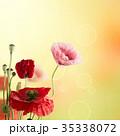 背景 お花 フラワーの写真 35338072
