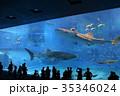 沖縄美ら海水族館 35346024