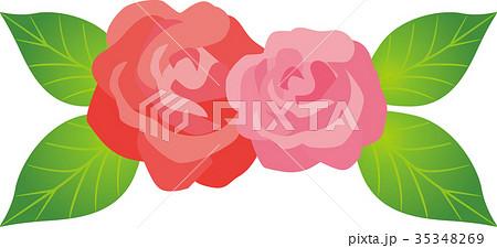バラの花 35348269