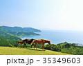 青空 馬 牧場の写真 35349603