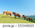 青空 馬 牧場の写真 35349605