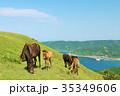 青空 馬 宮崎県の写真 35349606