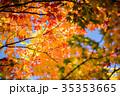 もみじ 楓 紅葉の写真 35353665