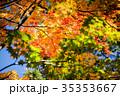 もみじ 楓 紅葉の写真 35353667