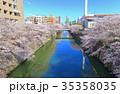 目黒川 桜 桜並木の写真 35358035