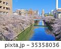 目黒川 桜 桜並木の写真 35358036