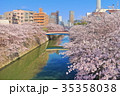 目黒川 桜 桜並木の写真 35358038