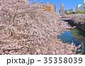 目黒川 桜 桜並木の写真 35358039
