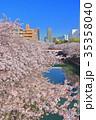 目黒川 桜 桜並木の写真 35358040