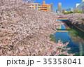 目黒川 桜 桜並木の写真 35358041