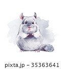 Chinchilla. Cute watercolor illustration 35363641