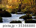 奥入瀬渓流 阿修羅の流れ 35366880