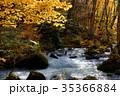 奥入瀬渓流 阿修羅の流れ 35366884
