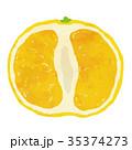 フルーツ・果物・みかん 35374273