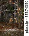 柿の木 柿 木の実の写真 35374350