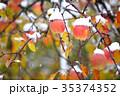 リンゴ 果物 雪の写真 35374352