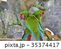 伊豆シャボテン動物公園のミドリコンゴウインコ 35374417