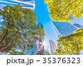 高層ビル 新緑 夏の写真 35376323