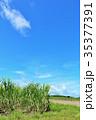 青空 サトウキビ サトウキビ畑の写真 35377391