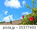 青空 ハイビスカス 沖縄の写真 35377403