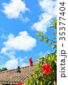 青空 ハイビスカス 沖縄の写真 35377404