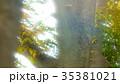 新緑 35381021