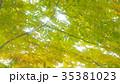 新緑 35381023