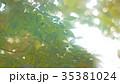 新緑 35381024