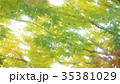 新緑 35381029