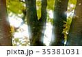 新緑 35381031