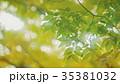 新緑 35381032