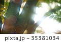 新緑 35381034