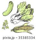 ベジタブル 野菜 カラーのイラスト 35385334