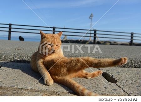 猫ちゃんのびのび 35386392