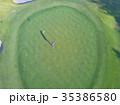 ゴルフをする女性 35386580