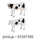 ウシ 牛 家畜のイラスト 35387389