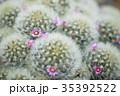 サボテン 花 植物の写真 35392522