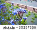 公園の花 35397660