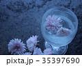 菊の花 35397690