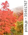 植物 樹木 木の写真 35401767