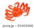 タラバガニ 水彩画 イラスト 35403066