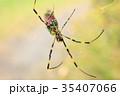 昆虫 蜘蛛 蜘蛛の巣の写真 35407066