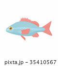 サカナ 魚 魚類のイラスト 35410567
