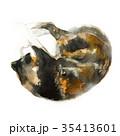 ねこ ネコ 猫のイラスト 35413601