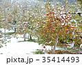 雪 冬 積雪の写真 35414493