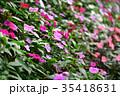 花 植物 花壇の写真 35418631