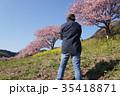 河津桜   男性 35418871